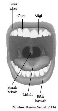 Gambar-6.6-Di-rongga-mulut-terdapat-lidah