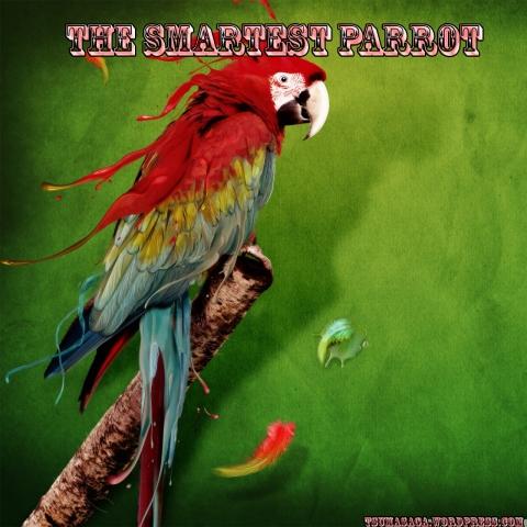 parrot_2-wallpaper-1280x1280